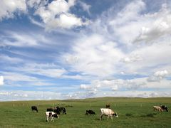 Yili closes deal with DFA in setting up U.S. dairy plant