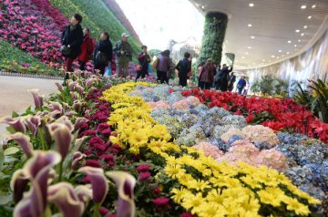 Auctioned transaction at Kunming flower market down 2.7 pct